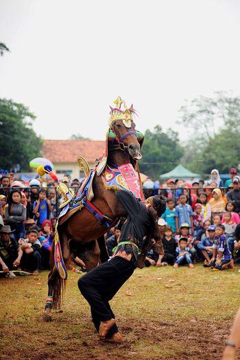 Kuda Renggong Sumedang Horse Animal Photography EyeEm Best Shots Eye4photography  EyeEm Indonesia Indonesia Traditional Performing Arts Event Streetphotography Eyeemphotography Hayukasumedang
