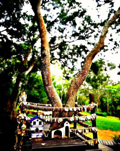 Tree No People Day Outdoors Nature Animal Themes Leopard Close-up