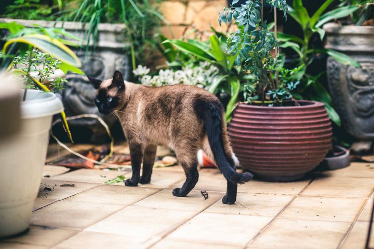 Cat standing on tiled floor