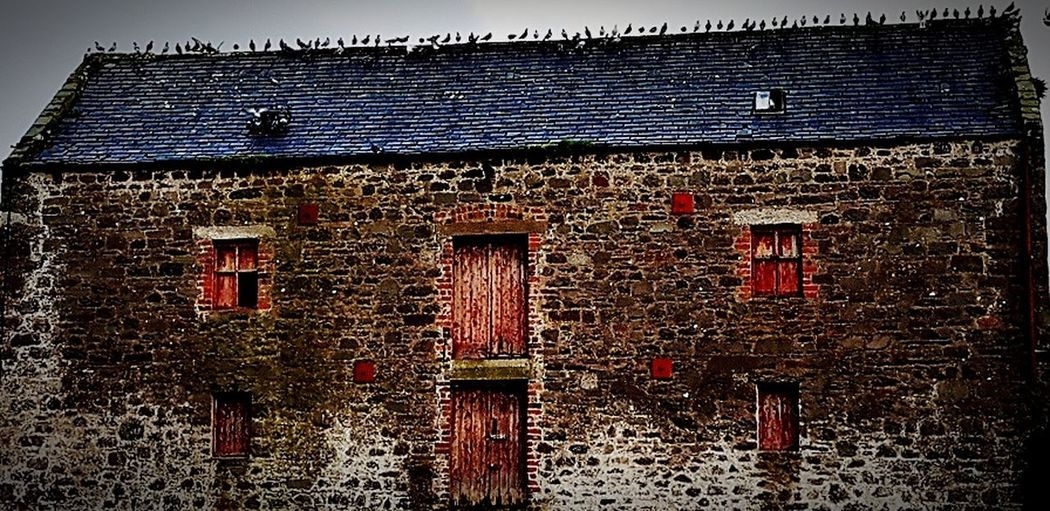 old mill Barn Drummore Taking Pictures Taking Photos Bird Watching Drummore Pigeons Birds Mobile Photography Taking Photo Photography Bird Photography Note 8 Photography Birds On Roof Birds Of EyeEm  Birds_collection Old Barn Old Buildings Old Mill  Architecture Old Building Building Exterior Old Times Buildings House No People Outdoors Shades Of Winter