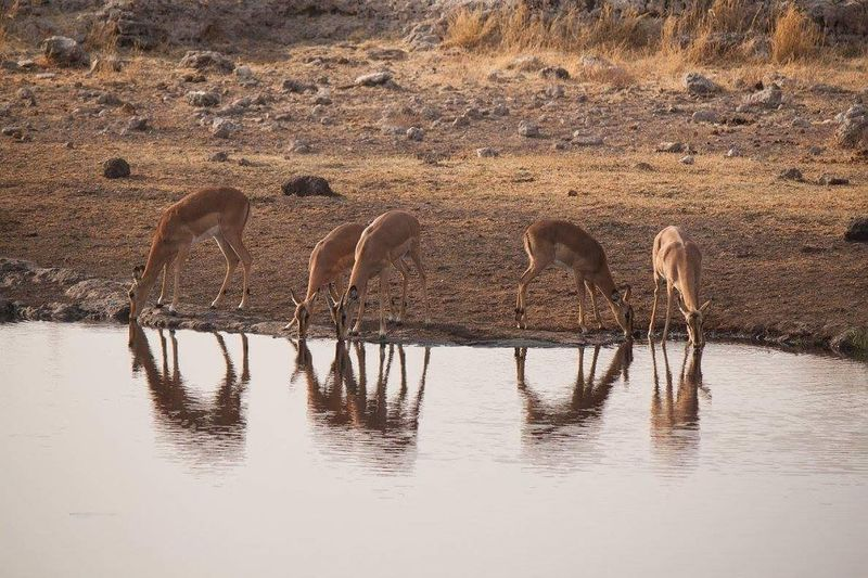Into the wild... Namibia 08•2016 Animals In The Wild Reflection Water Nature Animal Wildlife Relax Globetrotter Canon Lonelyplanet Africa Namibia Livefortravel Waphaphotographer EyeEmNewHere Phototraveller Liveforadventure Nationalgeographic Wanderlust Nature Wonderful Travel Photography Eyemphotography Travel Destinations Reflection Silence