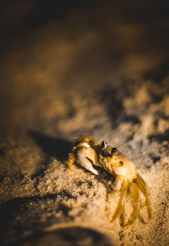 Close-up of spider on sand