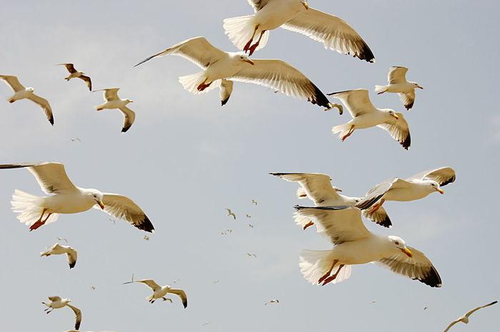 Liberty Volatile Animal Cielo Flying Gabbiani Sky Stormy