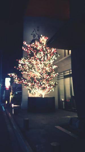 RePicture Giving Christmas Tree Kyoto Favorite 地元のお気に入りスーパー。品揃えが好み。オーガニックとか地元産とか。しかもちゃんとお安い。