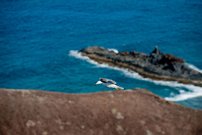 Seagull flying above shore