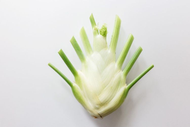 symmetry... Fennel Studio Shot White Background Green Color Freshness No People Indoors  Food And Drink Still Life Food Close-up Nature Plant Directly Above Wellbeing Healthy Eating White Color High Angle View Copy Space Beauty In Nature Growth