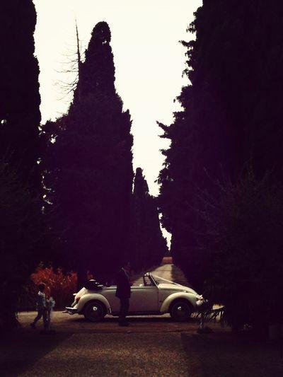 Wedding Vintage Cars EyeEm Filter Food P Cool Viale alberato con auto d'epoca vecchio stile ~