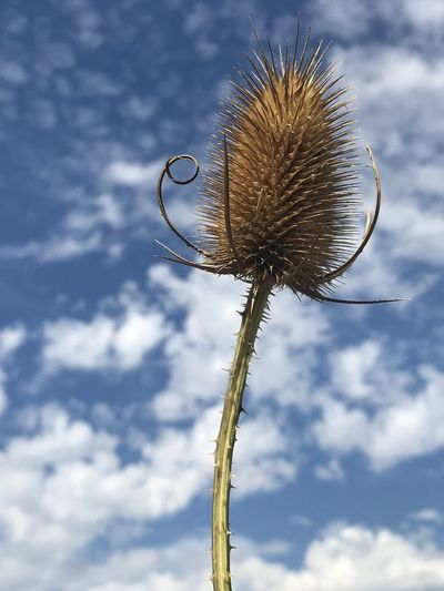 Low angle view of dried plant against sky