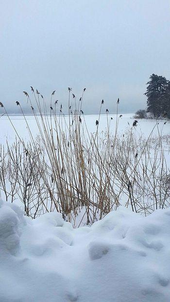 Snow White Snowday Snowing EyeEm Best Shots Turkiye... Bolu Abant Abantgölü Nature Photography Lake View