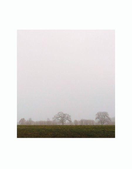 Chasing Fog Minimallandscape Tree Portrait Minimalism
