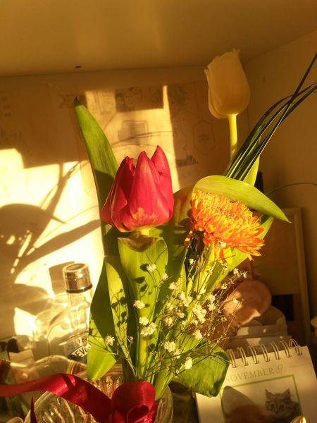 Flower Collection Flowerporn Tulip Sunbathing Flowerlovers