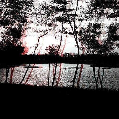 Click Cymeraapp Evening Lgl90