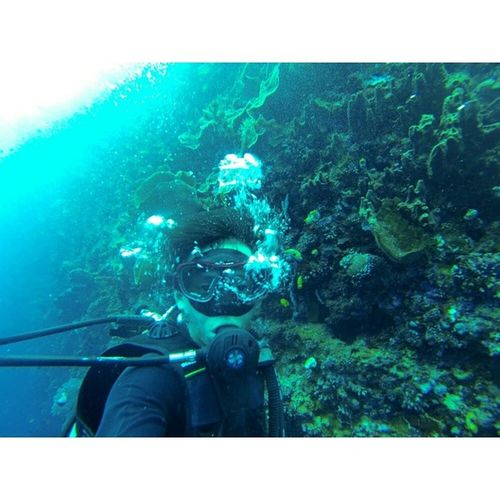 The sea, corals, fishes, many fishes, cute ugly fat skinny fishes AND ME! Fyeah Satisfyingshyte Diving Gopro goproselfie crazyexperience stillyoung stillhealthy