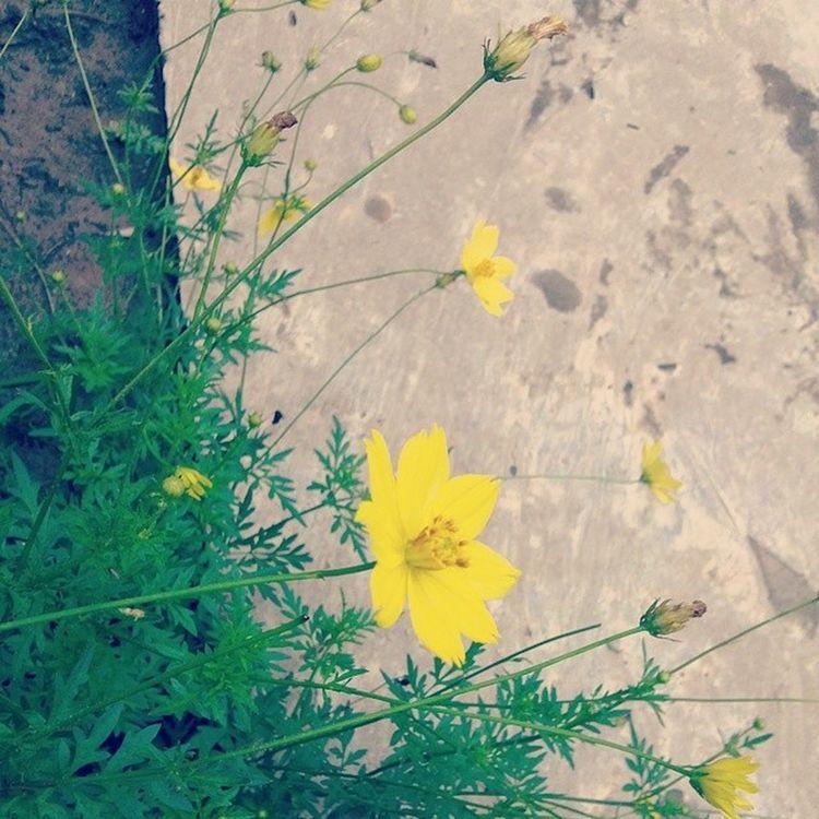 Flower Afterrain Country Baclieu vietnam