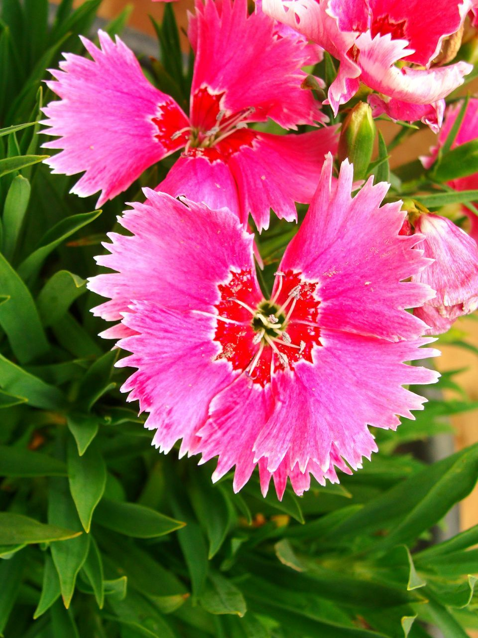 flower, petal, beauty in nature, nature, growth, fragility, flower head, freshness, plant, no people, leaf, pink color, day, outdoors, blooming, close-up, stamen