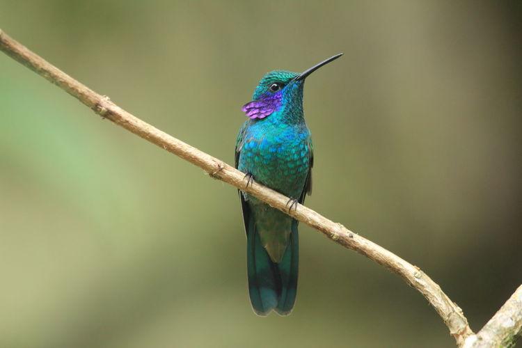 Close-up of hummingbird perching on branch