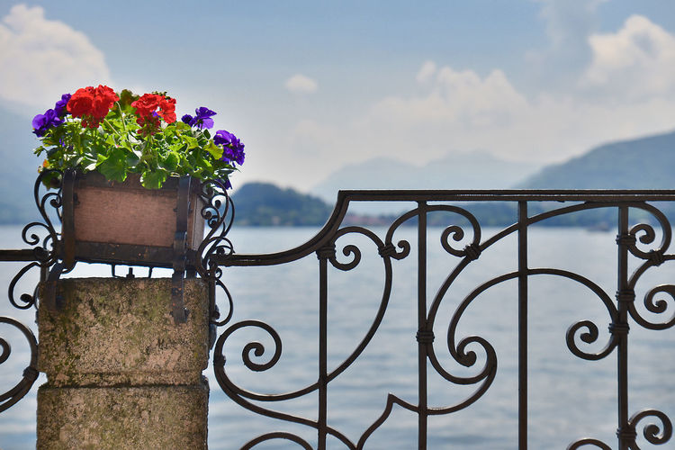 A colourful pot of flowers shot against a lake (Lake Como) in Italy on a bright and warm, sunny summer day with blue skies and some clouds. Como Lake Summertime Beauty In Nature Blue Sky Blue Sky And Clouds Close-up Cloud - Sky Colorful Day Flower Flowers Italy Lago Di Como Lake Lake View Metal Mountain Mountains Nature No People Outdoors Sea Sky Summer Water