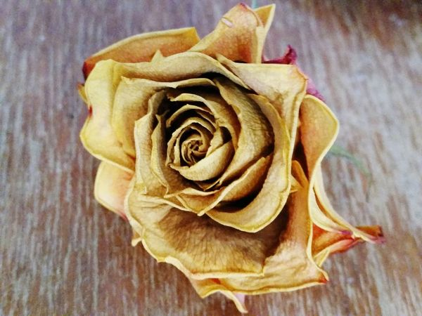 Showcase July The Beuty Of The Nature Things That Are Green Summertime The Essence Of Summer After Bloom The Rose Rose - Flower