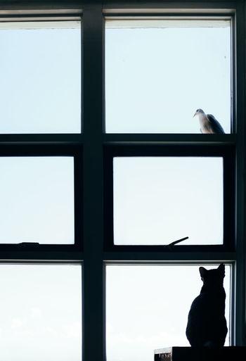 Bird perching on window against sky