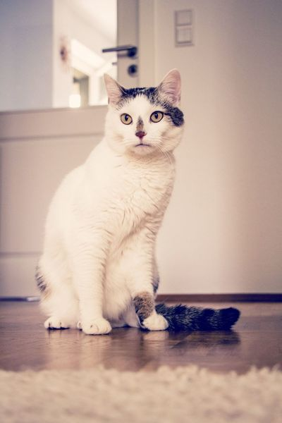 Cat I Love My Cat Cats Cat♡ Great Love Big Love Pet Portraits