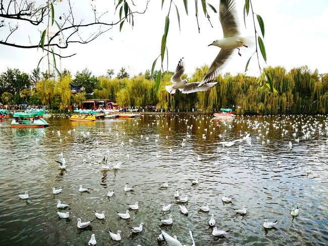 Water Nature Bird Perspectives On Nature Perspectives On Nature