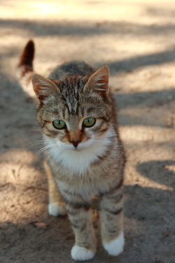 GATTO N°1 Animal Themes Animali Domestic Animals Gatti Whisker