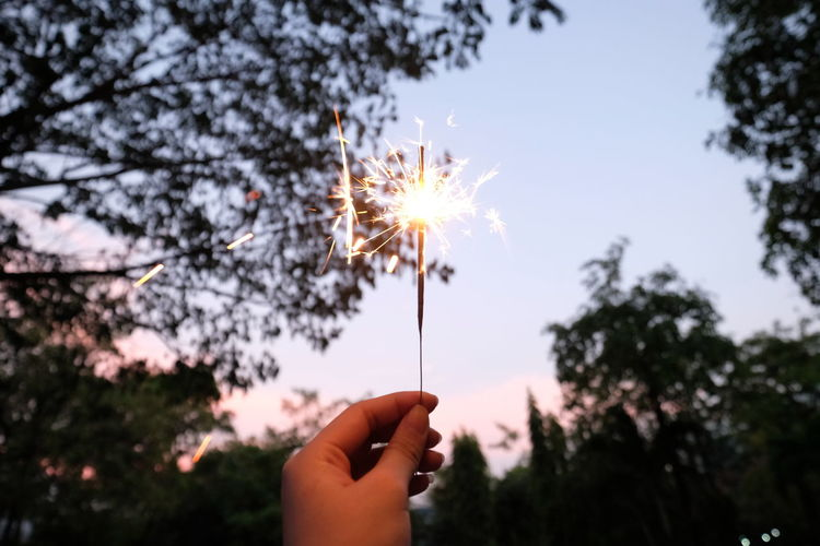 Cropped hand holding lit sparkler against trees during sunset