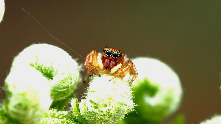 Insect Flower Spider Close-up Plant