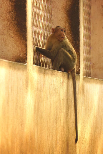 Monkey sitting on wall