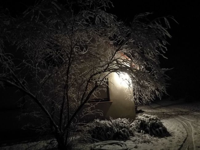 Tree Night Nature No People Winter Outdoors Beauty In Nature The Architect - 2018 EyeEm Awards