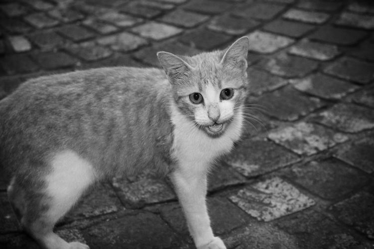 For cat lovers. Cat Streetphotography Blackandwhite Meow