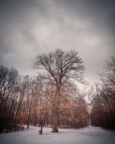 Bare trees on snow field against sky during winter