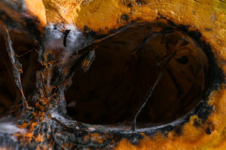Close-up No People Food And Drink Nature Burning Orange Color Food Heat - Temperature Wood - Material Healthy Eating Indoors  Full Frame Fire Tree Fire - Natural Phenomenon Day Wellbeing Flame Log Fungus Cave Pumpkin Filament Spider