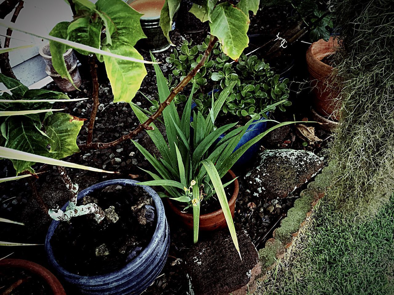 plant, growth, nature, potted plant, green color, no people, high angle view, plant part, leaf, dirt, day, freshness, beauty in nature, food and drink, botany, land, food, outdoors, field, flower pot, gardening, plant nursery