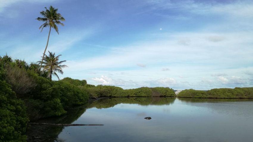Reflection Tree Water Sky Blue Nature No People Outdoors Lake Palm Tree Maldives My Maldives Takingphotos