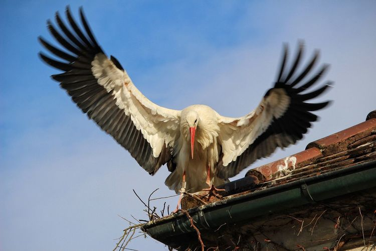 Low angle view of stork on roof