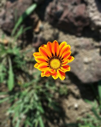 Flower Flower Head Nature Plant Petal Beauty In Nature Fragility