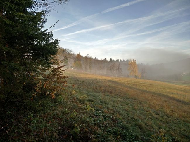 Stadl An Der Mur Steiermark Outdoors Forest No People Beauty In Nature Rural Scene Nature Agriculture Scenics Landscape Tree Growth Fog Austria