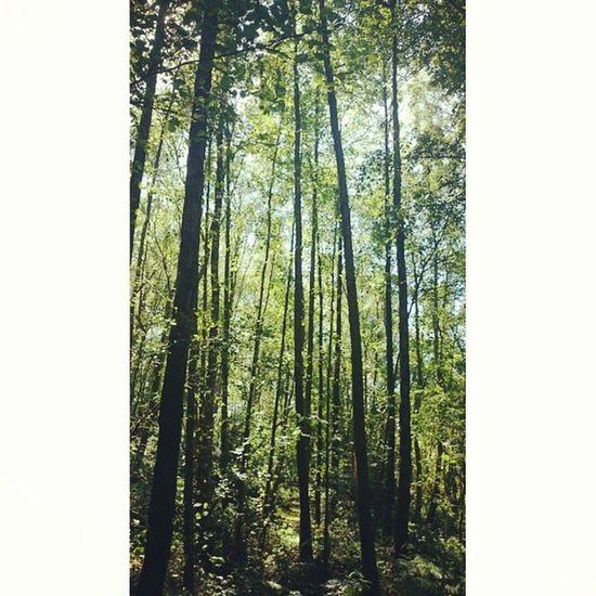 Trunklicious Tree Naturelovers Ig_britishisles treeporn