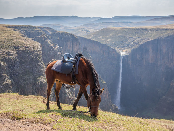 The 192m high Maletsunyane Falls and large canyon in the mountainous highlands near Semonkong, Lesotho, Africa. Horses Lesotho Pony Africa Animal Themes Basotho Beauty In Nature Day Domestic Animals Grass Horse Horse Riding Landscape Maletsunyane Mammal Mountain Mountain Range Nature No People One Animal Outdoors Semonkong Sky Standing Waterfall Been There. The Week On EyeEm