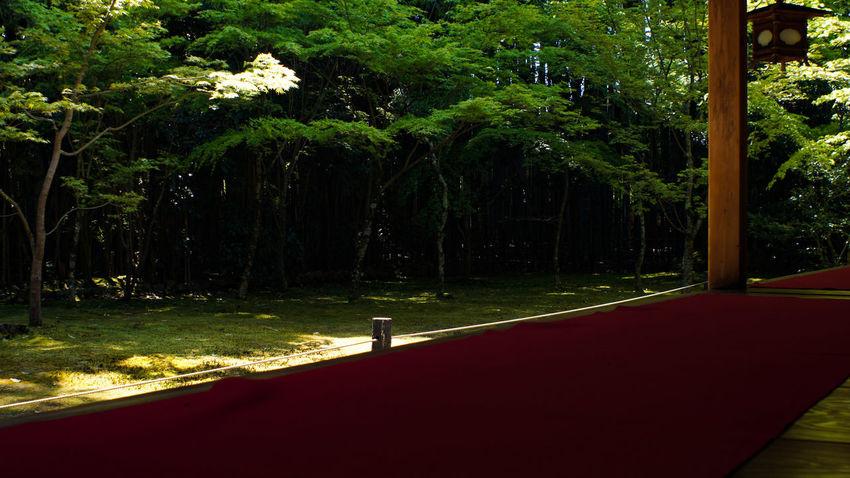 Buddhist Temple Buddhist Takumar 28mm F3.5 Nex5 Day Garden Garden Photography