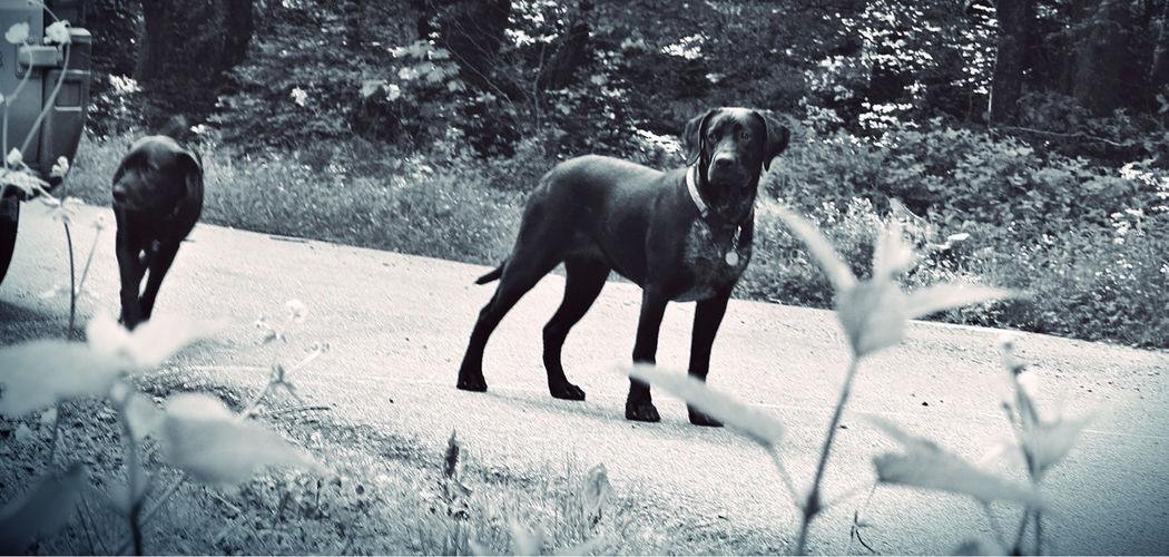 Animal Behavior Animal Trunk Black And White Blackandwhite Chien Dog Dogs Domestic Animals Loyalty Noir Et Blanc Noiretblanc Pets Animal Themes Chiens No People Animal