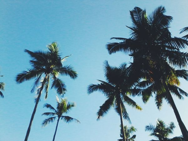 A li'l bit of fresh air. Palm Tree Tree Low Angle View Tree Trunk Nature Palm Leaf Sky Scenics Beauty In Nature Tropical Climate Blue Tranquility Day No People Outdoors Travel Destinations Sea Vacations Clear Sky Plant Part EyeEm Nature Lover Earth Day 2k17 Freshness