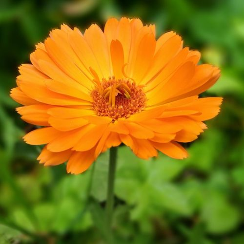 Flower, orange flower, macro Flowers,Plants & Garden Flowers, Nature And Beauty Flowerphotography Flower Head Beauty In Nature Nature First Eyeem Photo