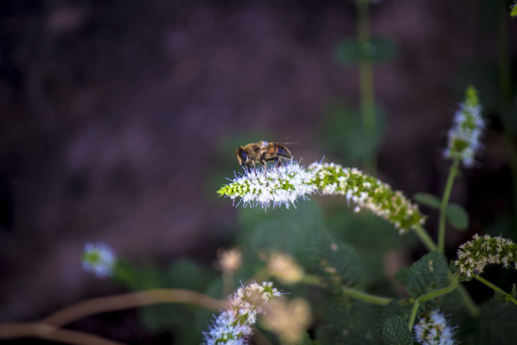 Close-up of bee on flowers