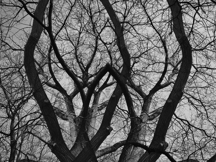 High contrast of dead trees in black and white - Concepts of Halloween, Friday the 13th, Mysterious environment. Branch Tree Day Outdoors Backgrounds Nature No People Sky Scary Death Horror Night Witch Background Halloween Friday 13th Wood Spooky Nature Branches Creative Evil Night Shadow Abstract Tree