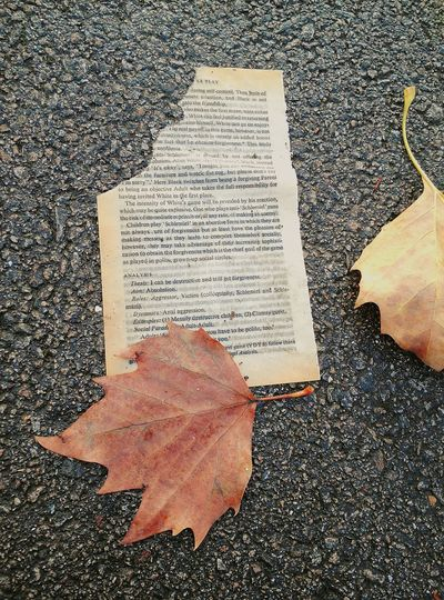 I saw this as I walking in the park. It makes me quite sad to see torn books. High Angle View Autumn Leaves Parks Park Torn Book Phone Camera Textured  Fallen Leaves Fall Leaves Close-up Outdoors Day No People Page Paper Book Eye4photography  EyeEm Best Shots Torn Ripped Ripped Paper Ripped in London , United Kingdom EyeEmNewHere EyeEm Selects Colour Your Horizn Visual Creativity