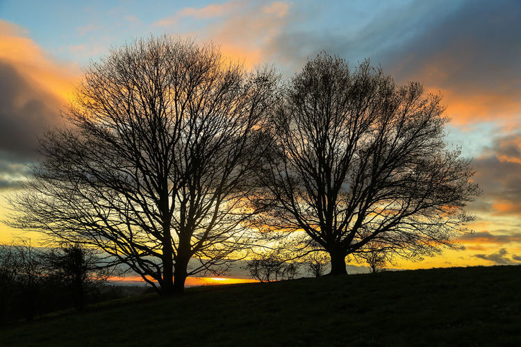 Bromsgrove England, UK Worcestershire Uk Bare Tree Beauty In Nature Branch Day Landscape Nature No People Orange Color Outdoors Scenics Silhouette Sky Sunset Tranquil Scene Tranquility Tree Yellow