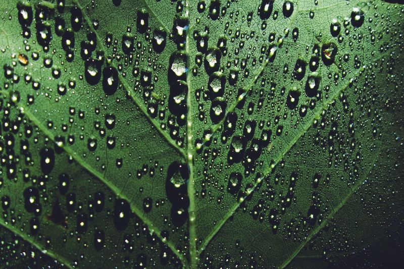 Drop Water Green Color Wet Close-up No People Leaf RainDrop Backgrounds Beauty In Nature Full Frame Plant Growth Purity Outdoors Plant Part Freshness Nature Rain