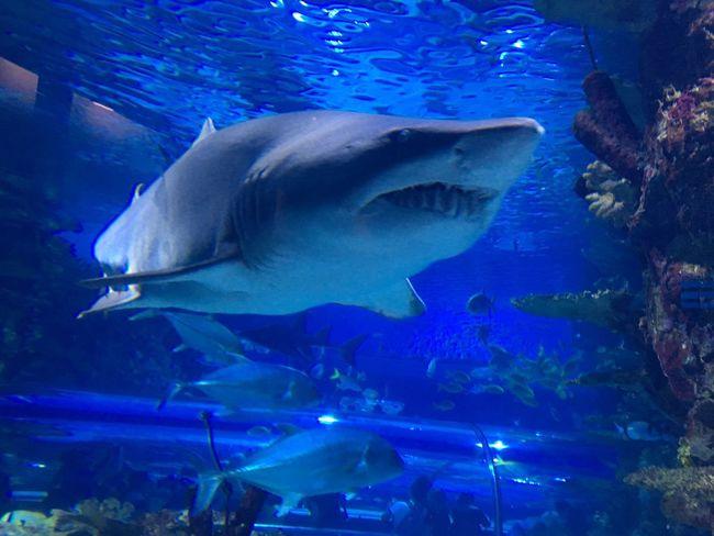 Underwater Animal Themes Sea Animals In The Wild Animal Animal Wildlife Water Fish Swimming Sea Life Shark UnderSea Tank Aquarium